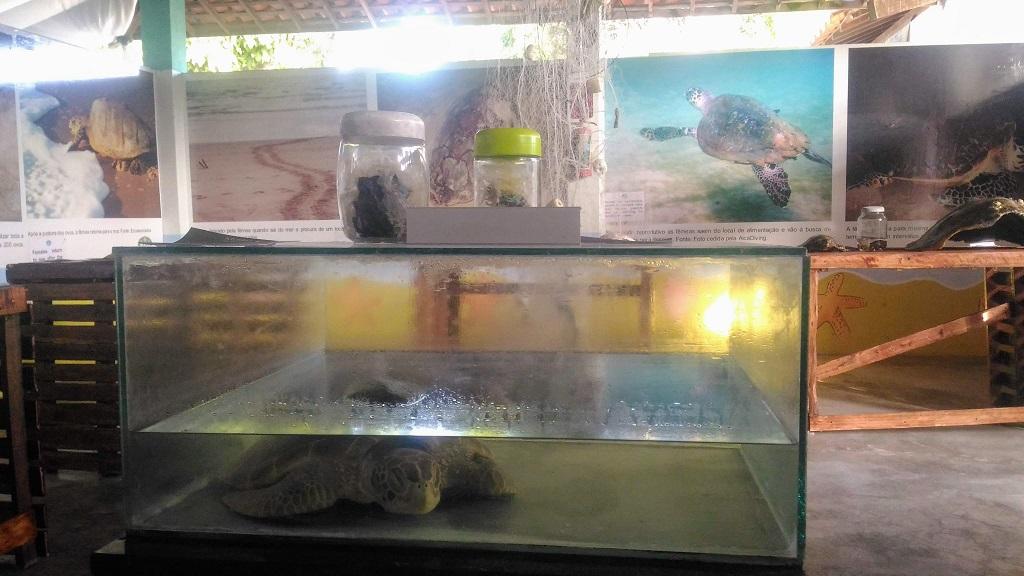 ecoassociados-porto-galinhas