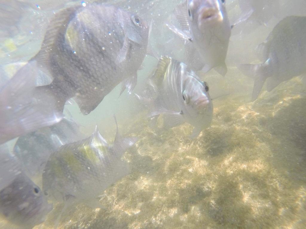 peixes-praia-vila-porto-galinhas