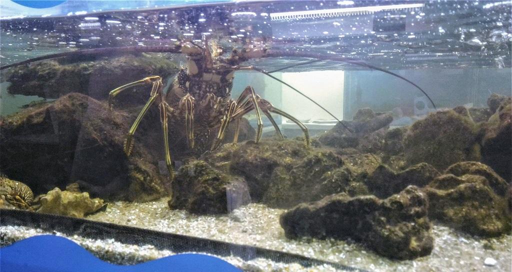 projeto-hippocampus-aquario