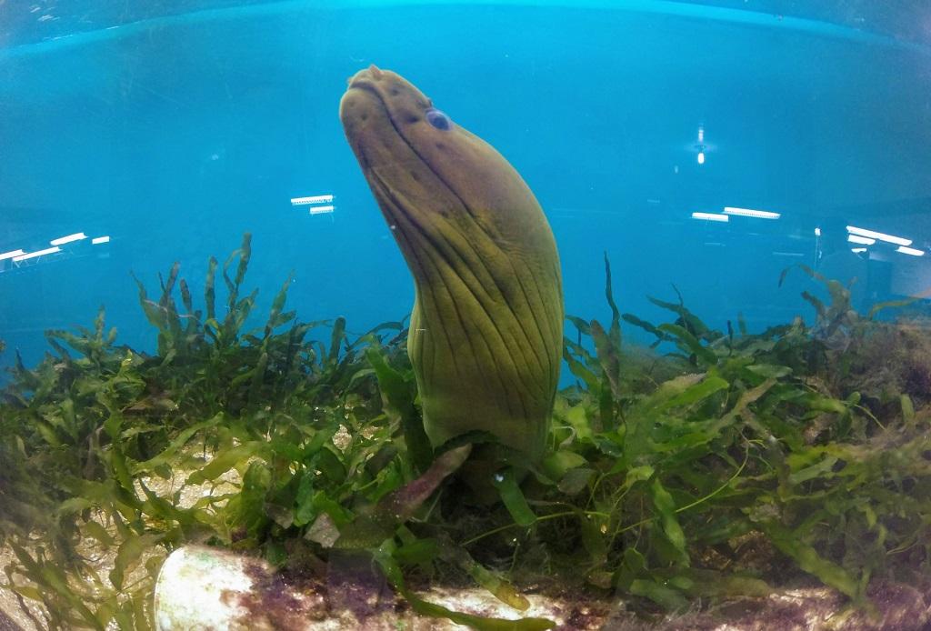 projeto-hippocampus-peixe-porto-galinhas