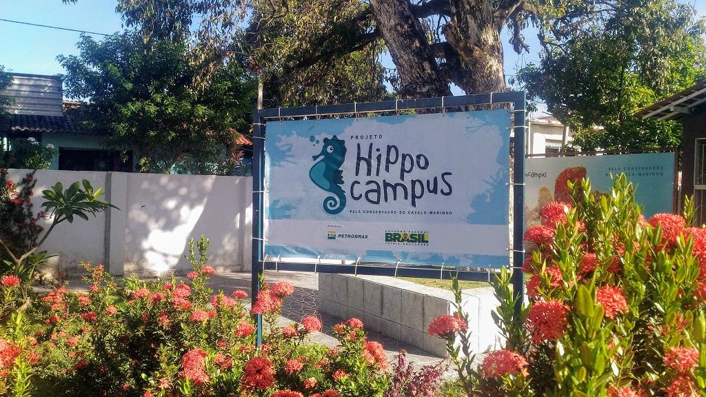 projeto-hippocampus-porto-galinhas