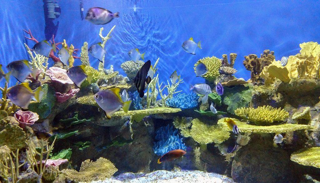 aquario-peixes
